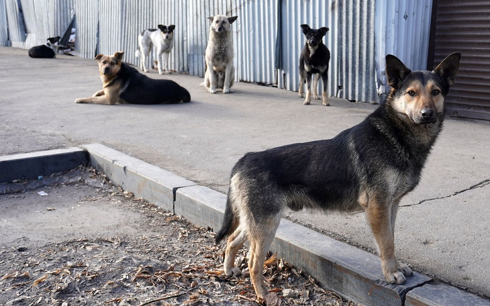 Разбираемся в ситуации с бездомными животными в городской среде.