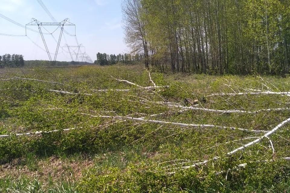 Порубочные остатки были оставлены на месте линии электропередач.