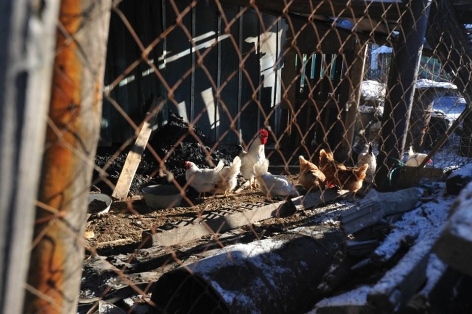 Ветеринары приняли ограничительные меры