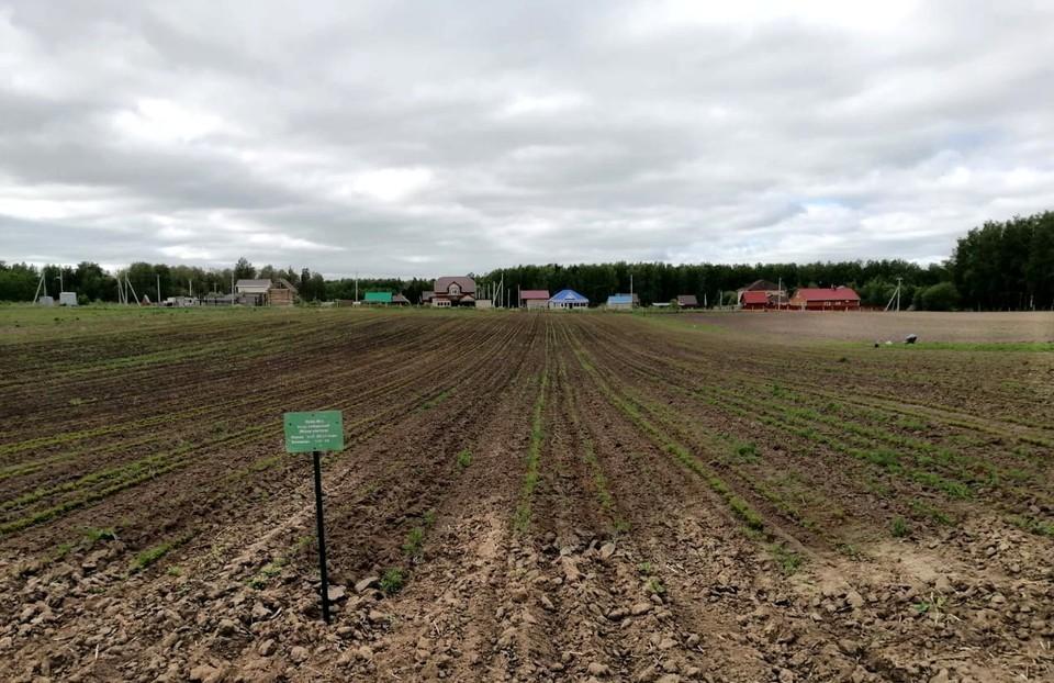 Работы по лесовосстановлению в Томской области ведутся постоянно