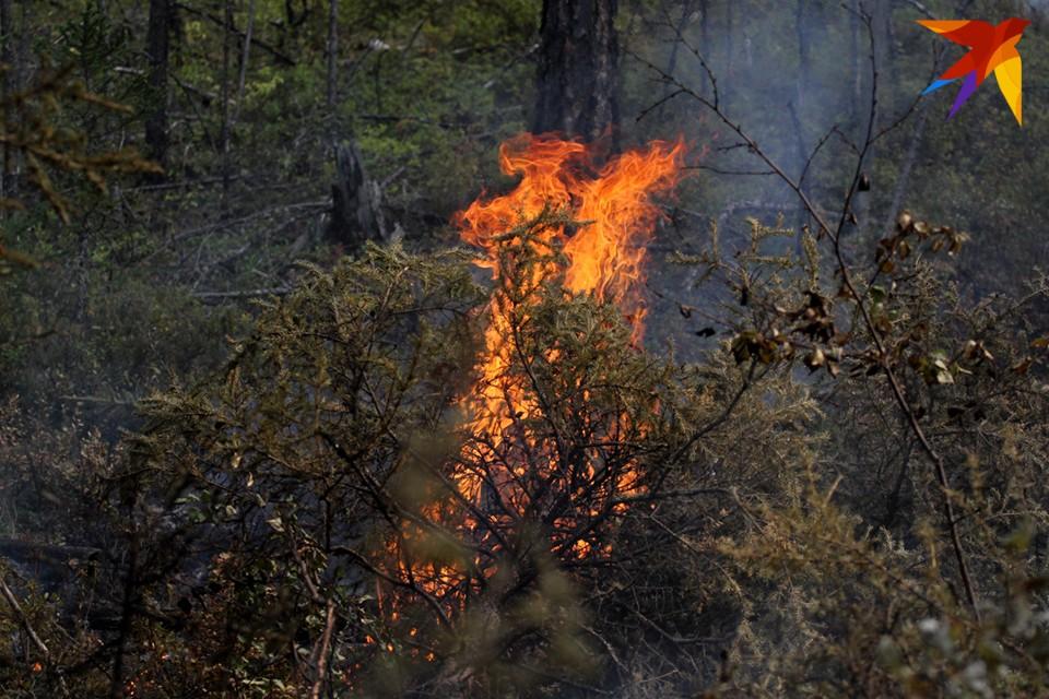 МЧС предупреждает о нежелательности посещения лесов, недопустимости разведения костров в лесах.