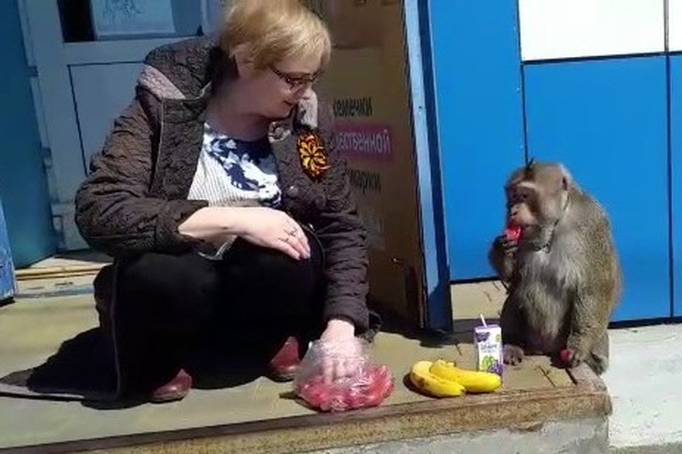 Сидевшая рядом с обезьяной жительница явно пребывала в некотором шоке и подсовывала животному бананы