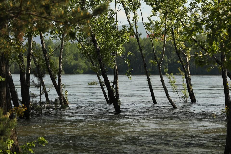 Паводки в Красноярске на 11 июня 2021: уровень воды в Енисее остался практически неизменным