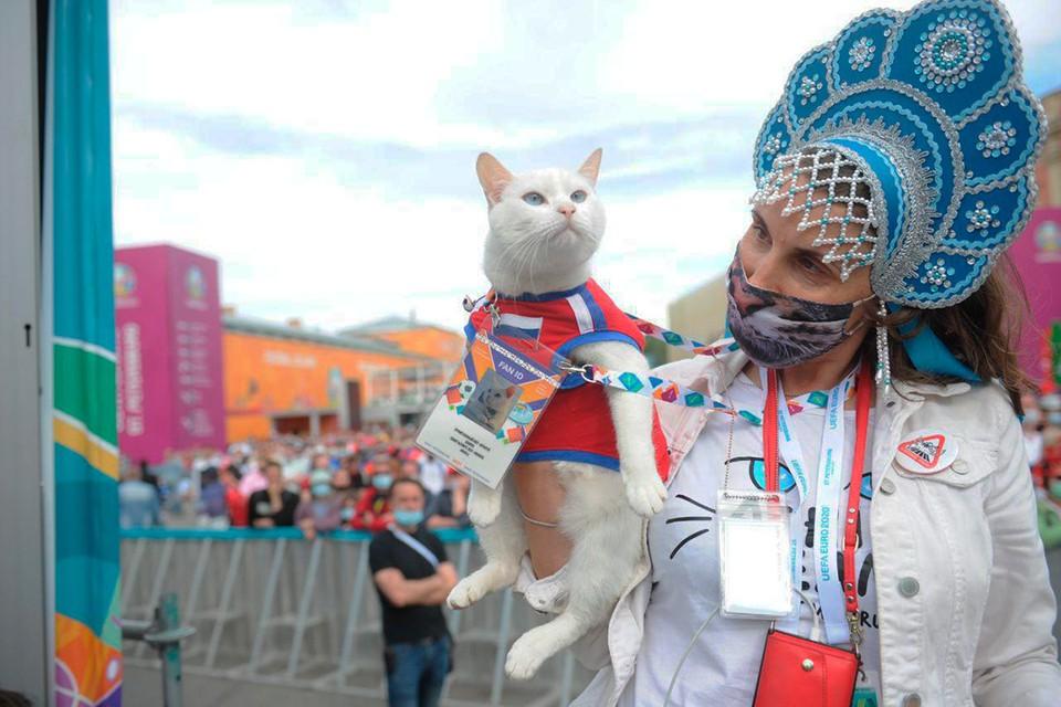 Эрмитажный кот Ахилл точно предсказал уже три матча Евро-2020.