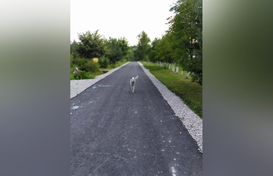 В поселке Заокском по требованию инвалида сделали дорогу