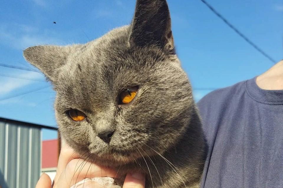 Татьяна подыскивает дом породистому коту Фото: @lelkae