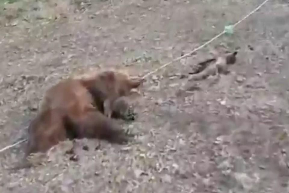 Погибших зверей сняли на видео очевидцы и поделились кадрами в соцсетях