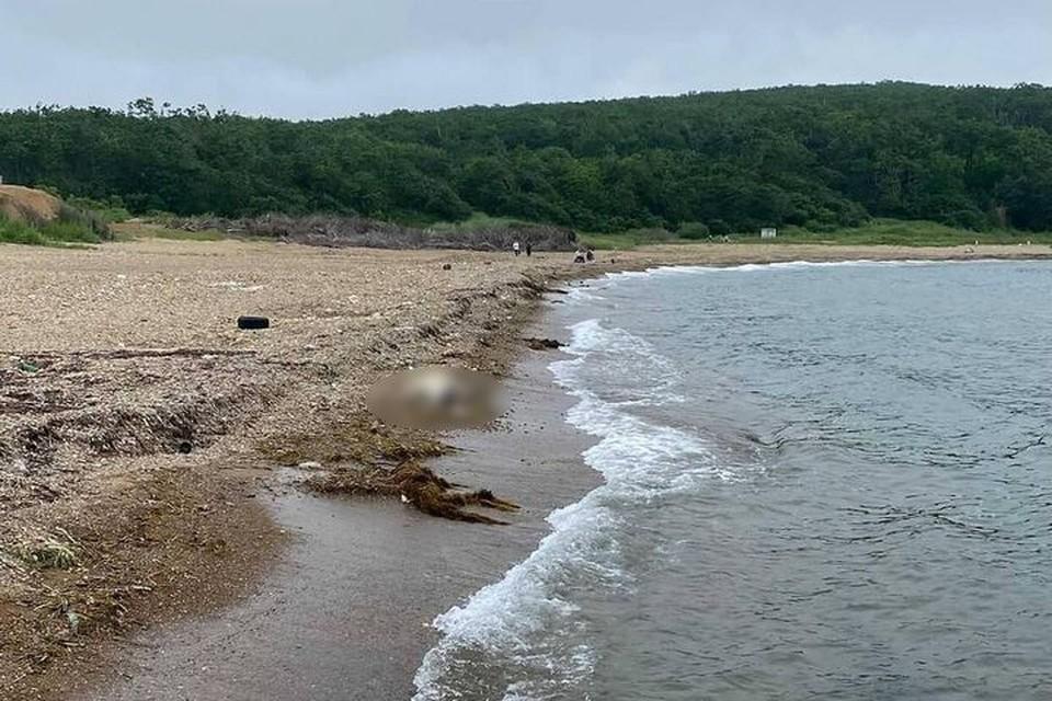 """Безжизненное тело оленя обнаружили на берегу пляжа центра """"Океан"""". Фото: dpskontrol125rus"""