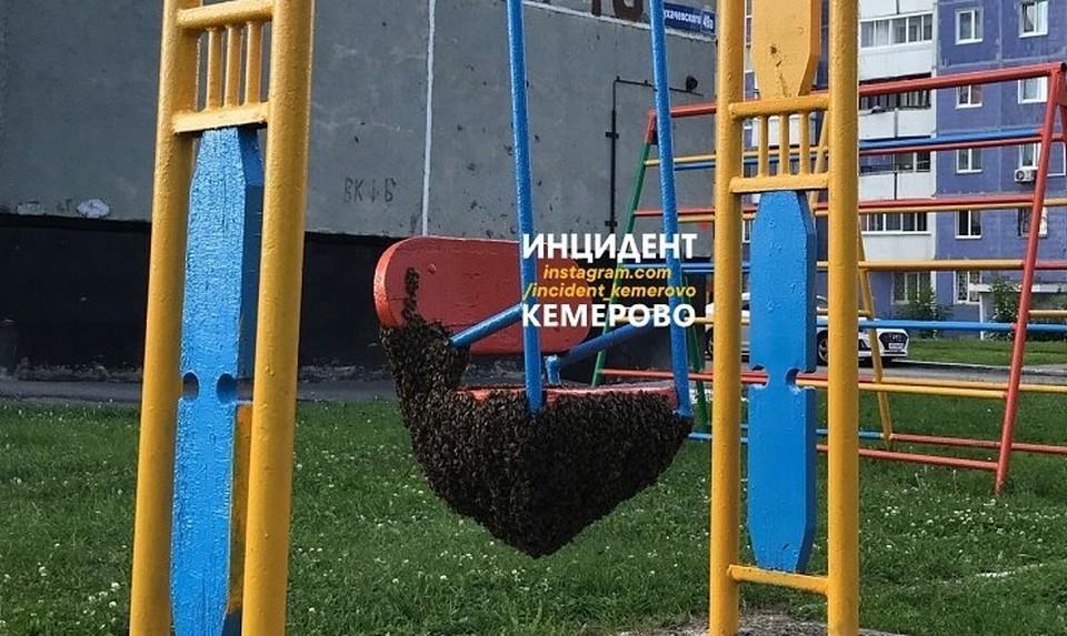 В Кемерове рой пчел оккупировал детскую площадку. Фото: ВКонтакте/incident_42.