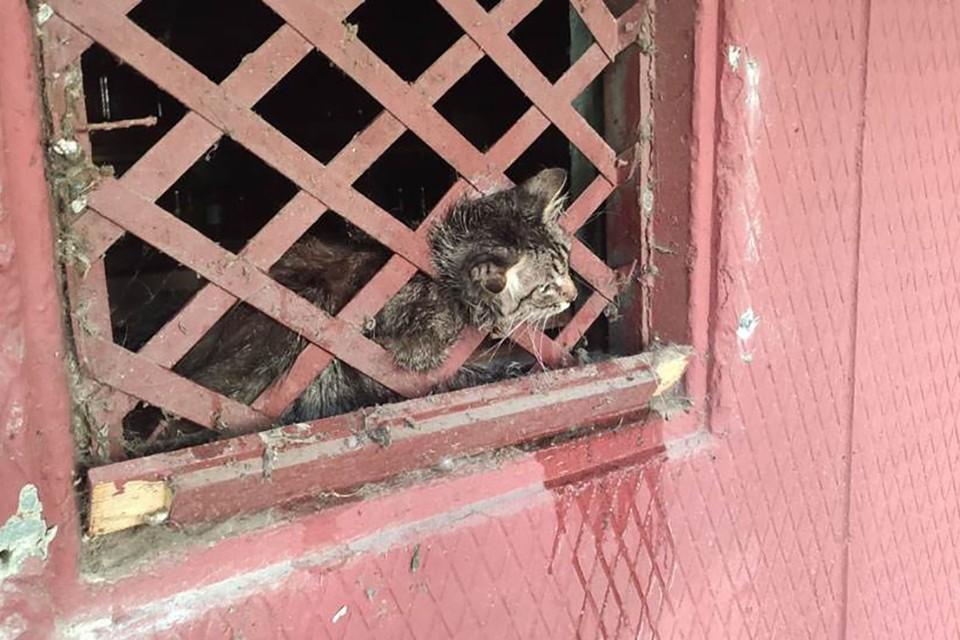 Для освобождения кота спасателям пришлось разрезать решетку. Фото: МЧС