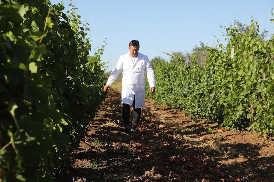 В Волгоградской области вино производят шесть предприятий. Фото администрации Волгоградской области