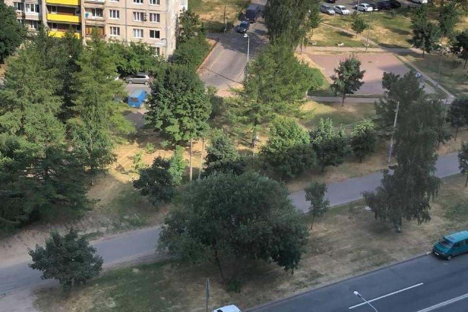 Аномальная жара в Петербурге выжгла газоны и высушила деревья