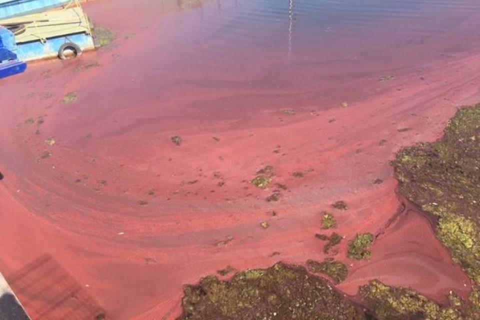 Финский залив в Ленинградской области окрасился в зловещий красный оттенок