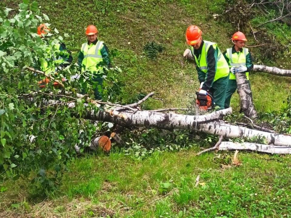 Крупная лесоперерабатывающая компания пришла на помощь Владивостоку. Фото: Ольга Суходоева.