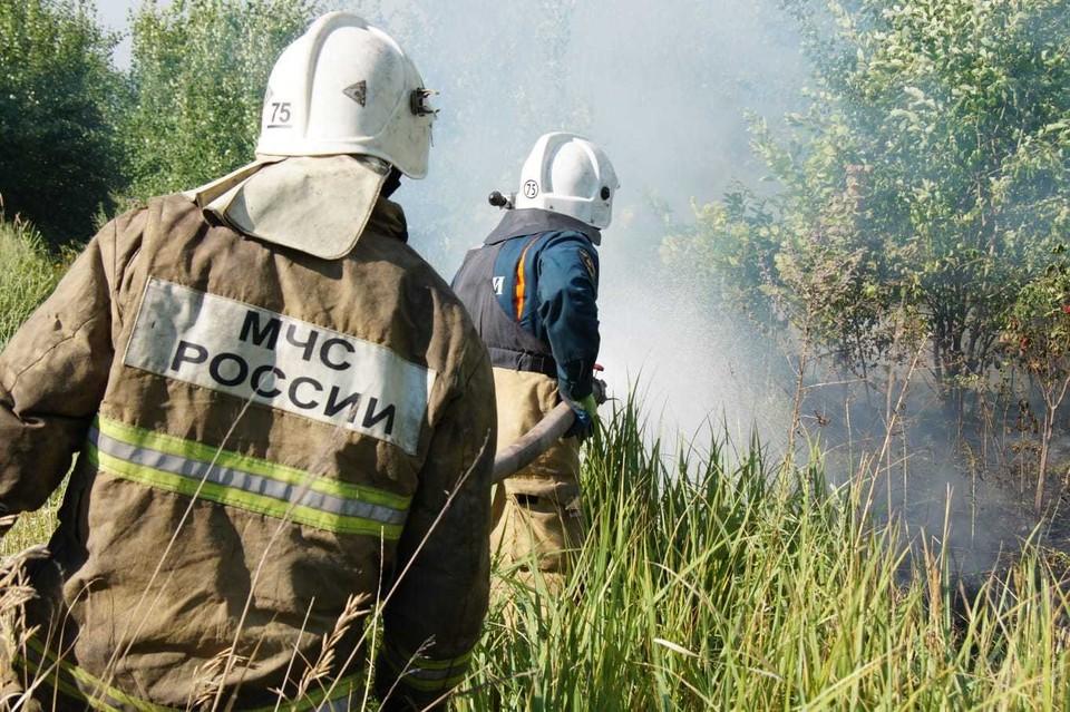 Территорию леса в Тольятти не собираются застраивать