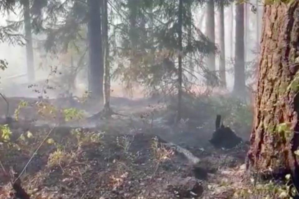 МЧС локализовали пожар в парке Соснового Бора в Ленобласти