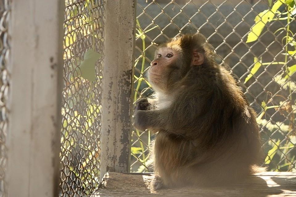 Мишу покалечили ради «фото с обезьянкой».