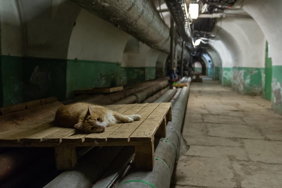 """Кошки и собаки очень любят забираться в подвалы жилых домов. Фото из архива """"КП""""."""
