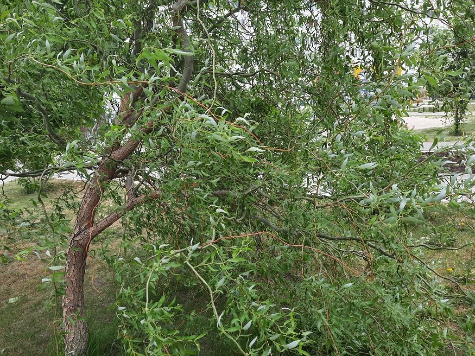 Погода на 18 июля в ЯНАО: местами кратковременный дождь