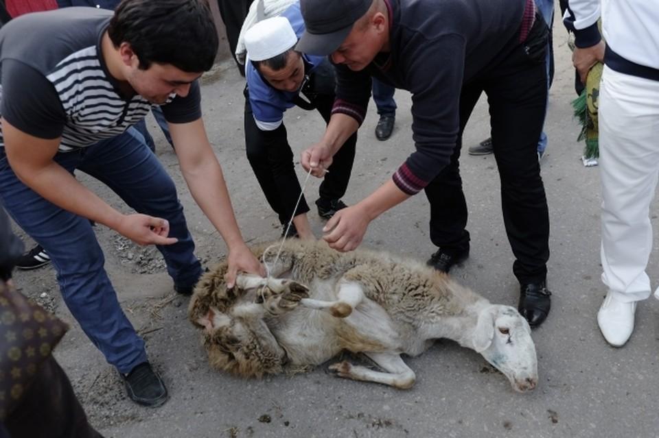 Жертвенных животных на Курбан-Байрам не повезут в центр Саратова
