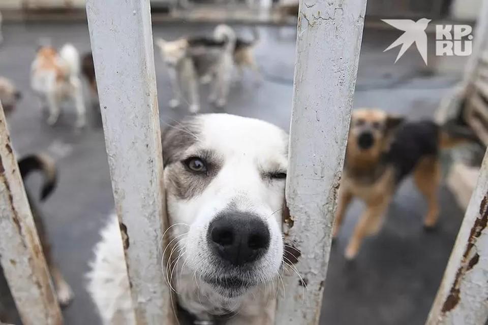 Проблема с налаживанием цивилизованного структурного подхода к обращению с бездомными животными очень актуальна в России.