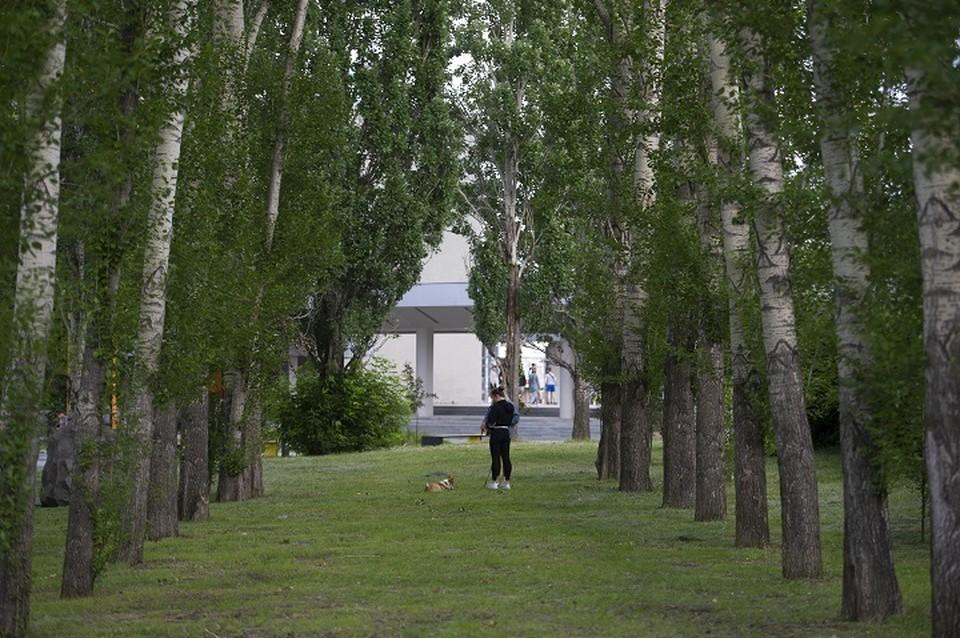 Сквер решено озеленить