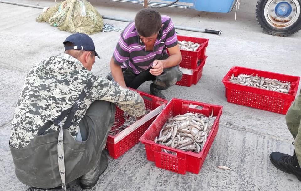 Пограничники нашли три тысячи особей рыбы различных видов. Фото: ПУ ФСБР России по РО.