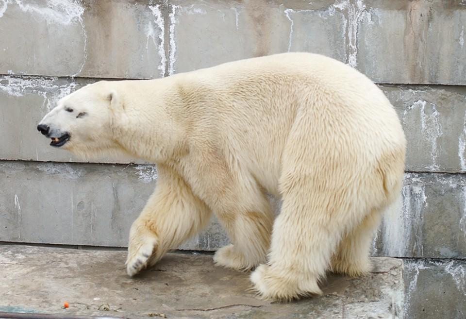 В зоопарке появится гостья из Москвы