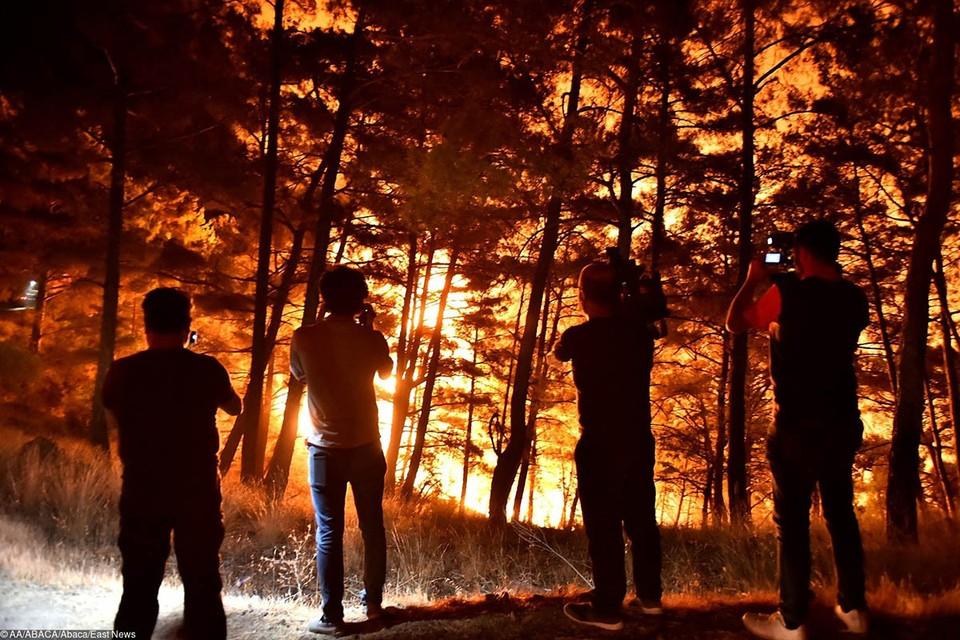 В районе города Манавгат в турецкой провинции Анталья горит лес на большой территории.