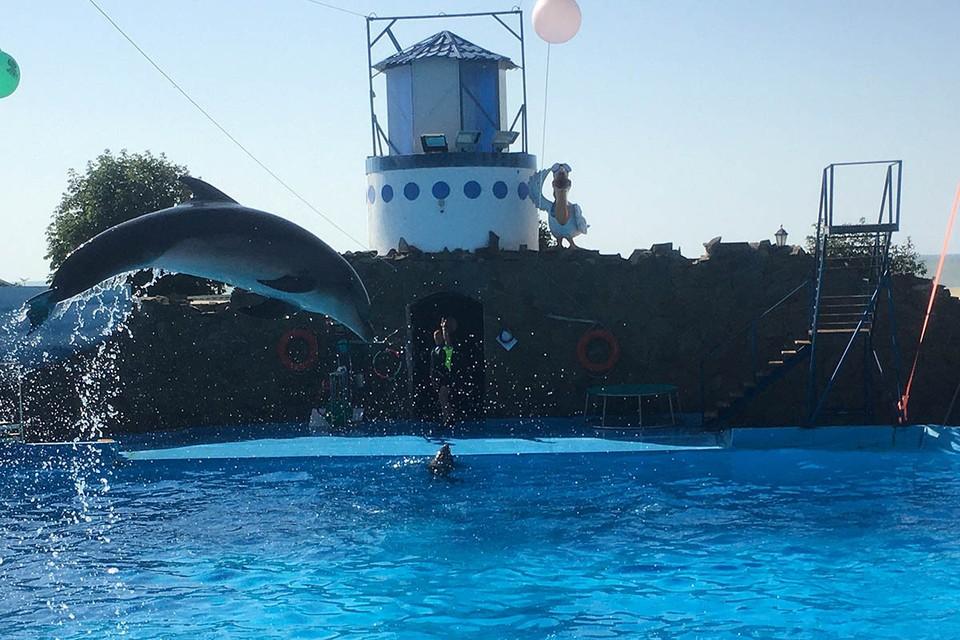 Дельфинарий в Ейске.