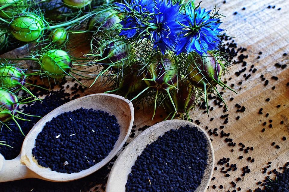 Речь идет о растении Nigella sativa, или чернушка посевная.