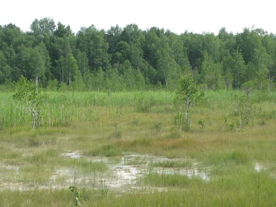 Биологи по праву называют Кокуйское болото природным архивом. Фото: пресс-служба СУЭК-Кузбасс.