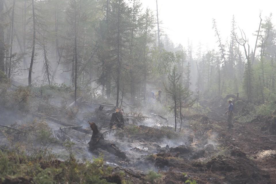 Около 580 гектаров горящей тайги потушили за сутки в Иркутской области