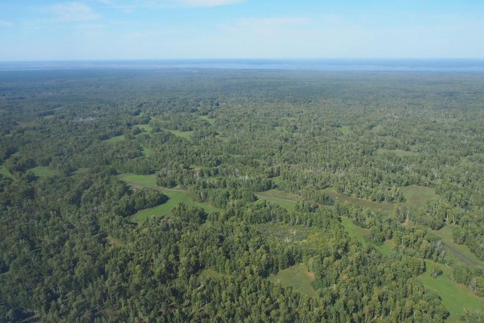В Новосибирской области в Караканском бору планируется создать особо охраняемую природную территорию. Фото: Правительство Новосибирской области