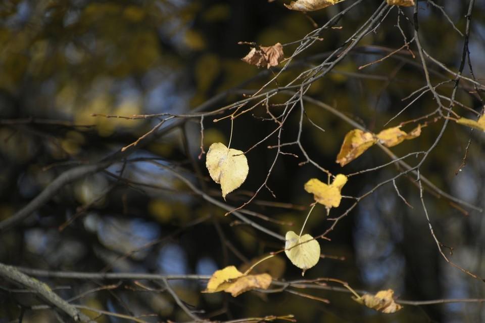 Осень принесла резкое похолодание