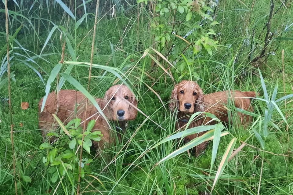 Под Гатчиной две верные собачки спасли хозяйку от верной смерти в лесу. Фото: vk.com/lizaalert_piter
