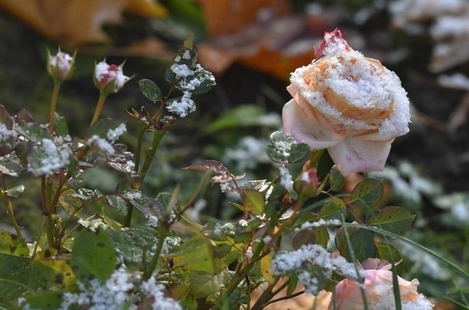 В Башкирии пришла пора заморозков