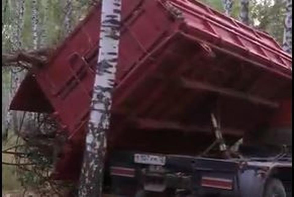 В тюменском поселке Винзили березовую рощу заваливают ветками.