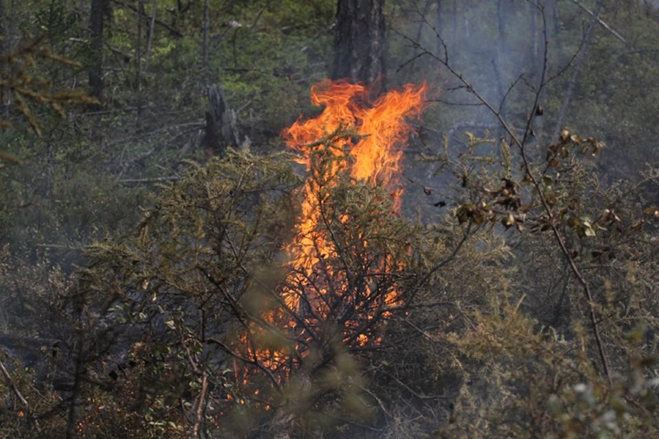 Режим ЧС отменен в лесах Катангского района