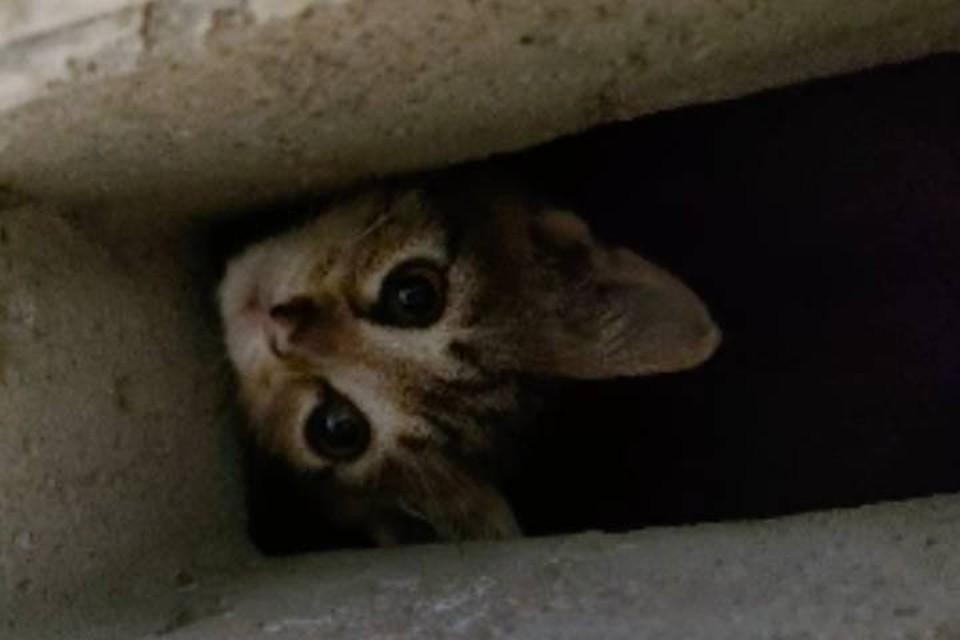Котята массово падают и гибнут в шахтах домов в Каменке
