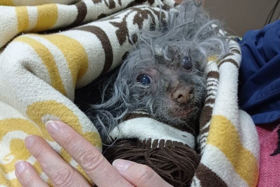 Собаке было уже немало лет, она хворала. Фото: vk.com/murmanpriut