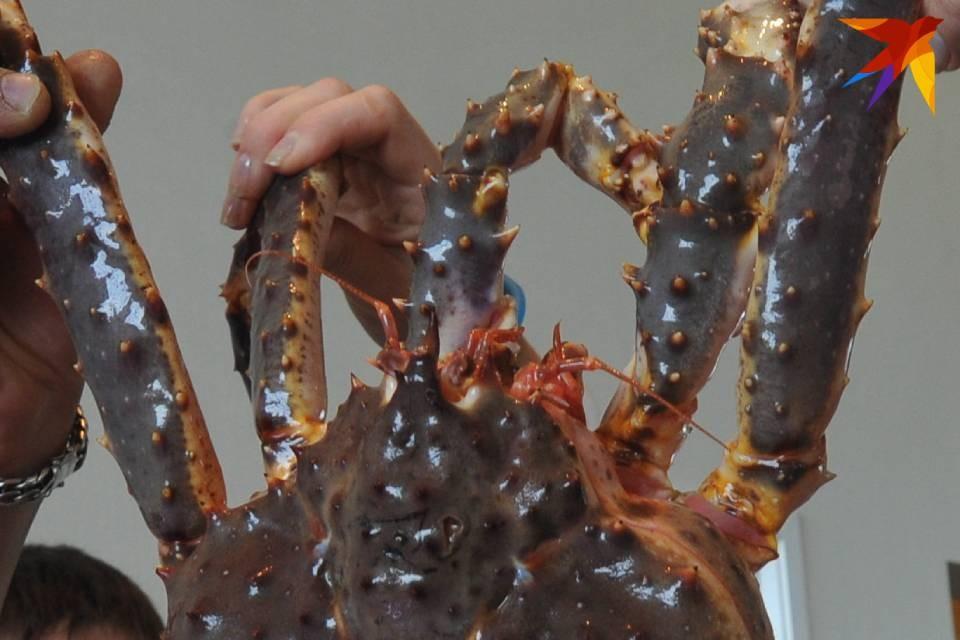 Крабы-мутанты удивляют даже опытных рыбаков.
