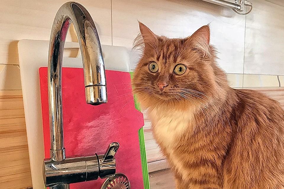 В части Свердловского округа Иркутска отключат горячую воду до 15 сентября.