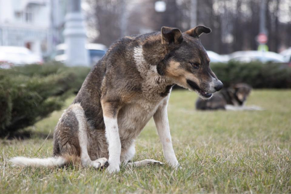 После инцидента с укусом ребенка владелец должен был изолировать собаку.