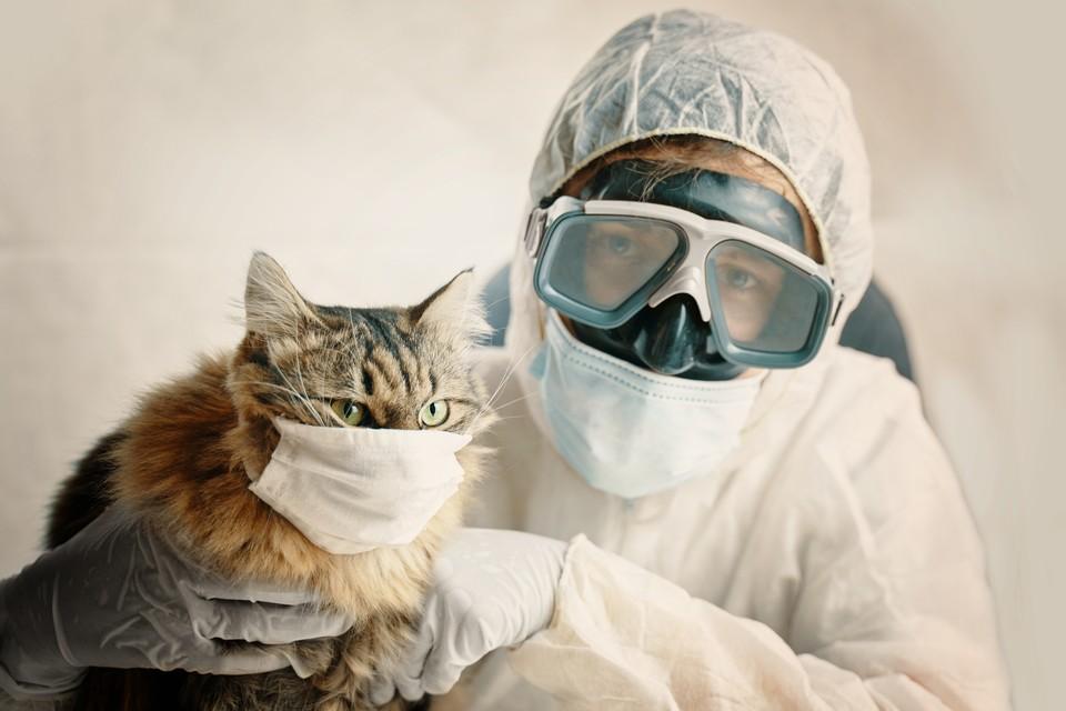 Домашние животные могут заражаться коронавирусом SARS-CoV-2 так же, как люди.