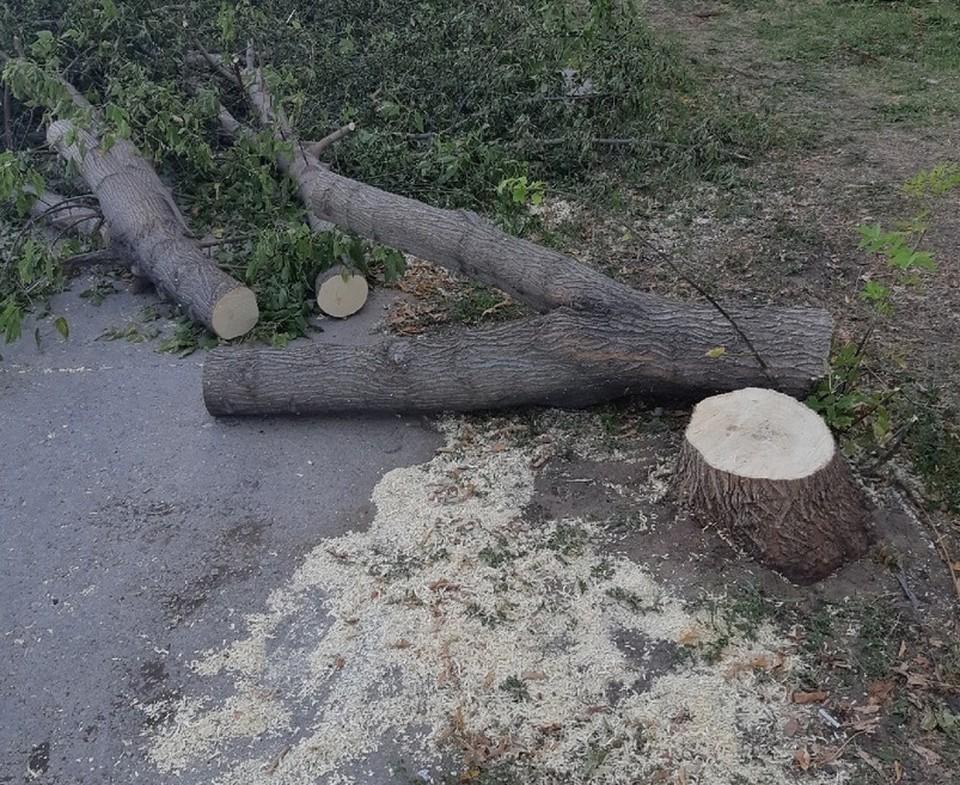 Опилка деревьев в Балакове
