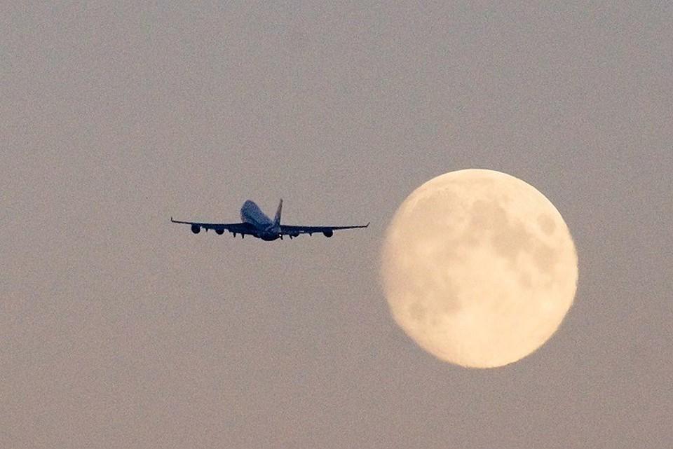 Ломидзе прокомментировала увеличение числа рейсов в Египет