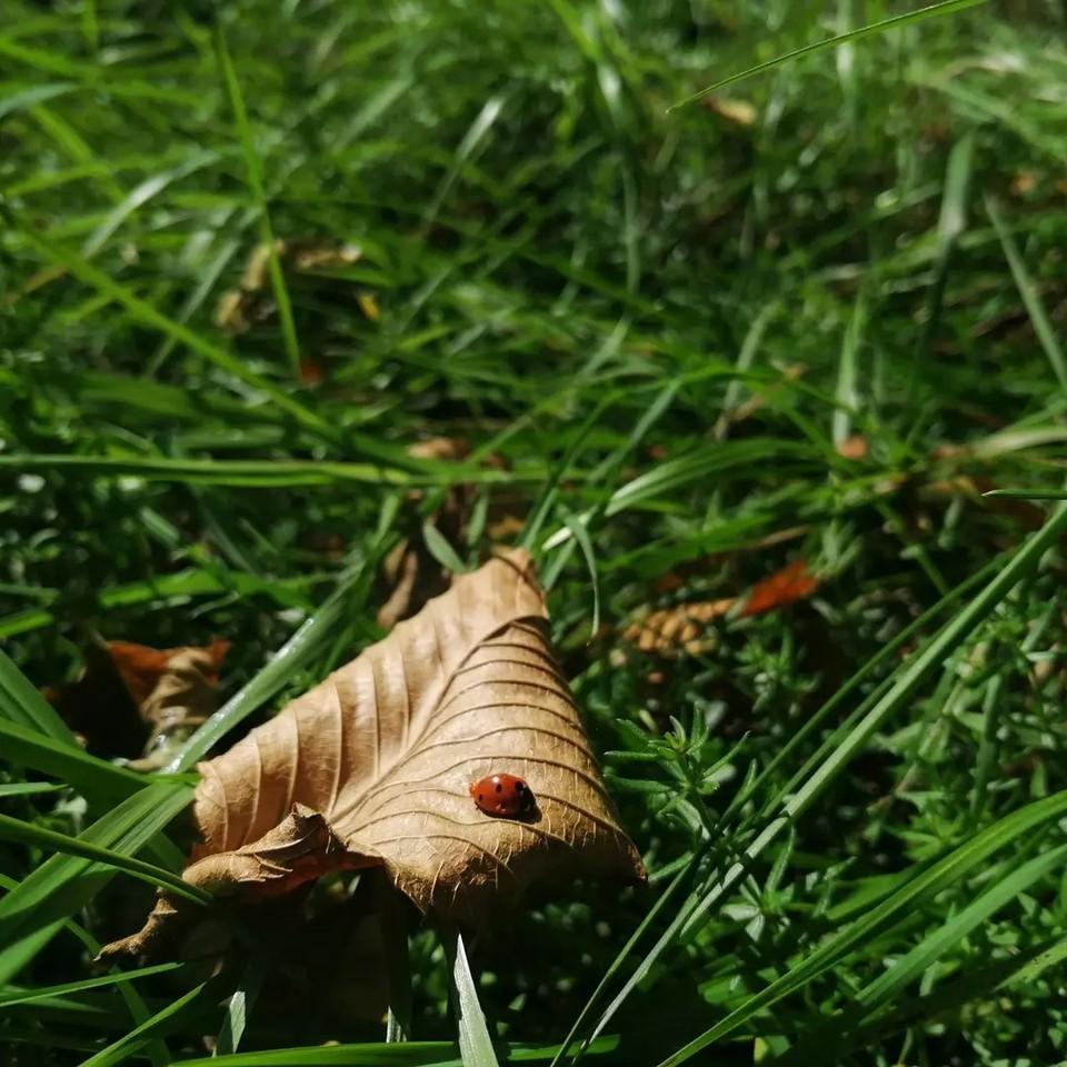 Осень о себе напоминает пожухлой листвой.