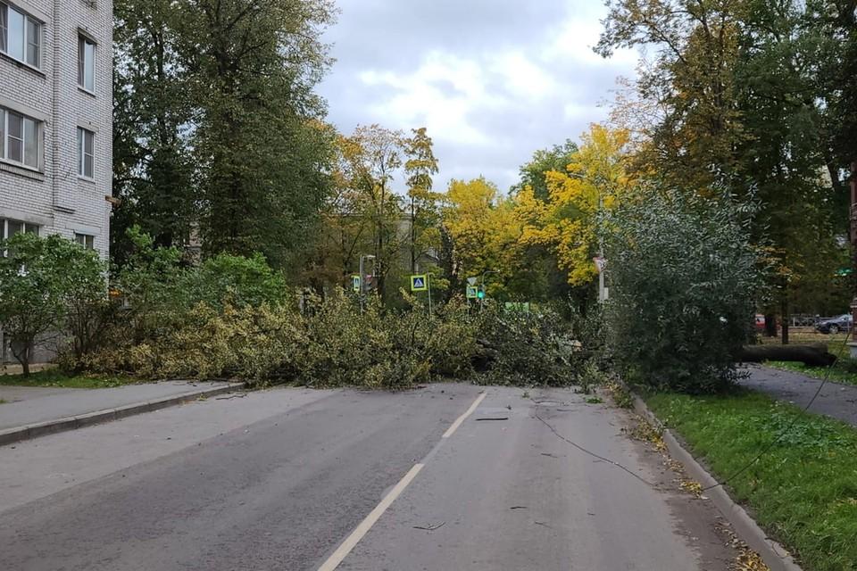 В Гатчине ветер повалил 10 деревьев. Фото: vk.com/gmr47