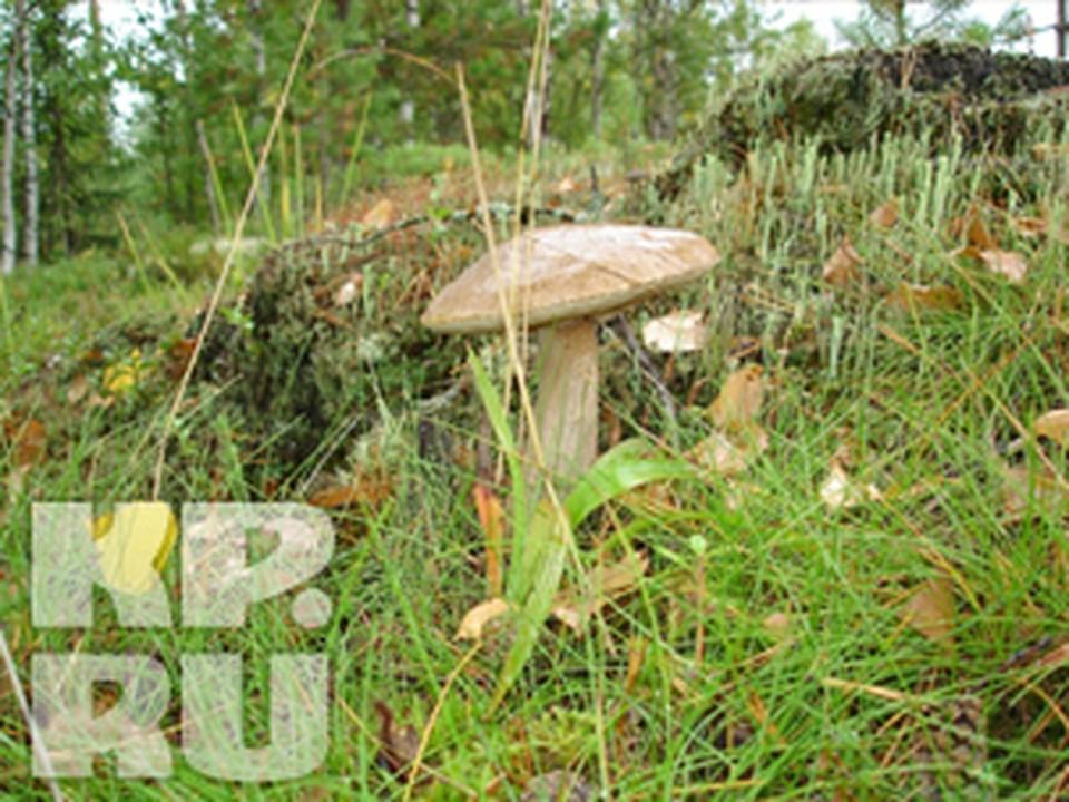 За год злоумышленники нарубили леса на сотни миллионов рублей